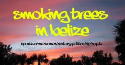 Smoking Trees in Belize